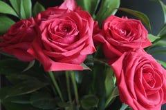 Cinco rosas grandes rojas en fondo negro Imágenes de archivo libres de regalías
