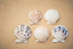 Cinco shell de vieira Fotografia de Stock Royalty Free