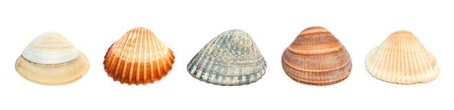 Cinco shelles. Fotos de archivo