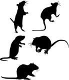 Cinco siluetas de la rata imagen de archivo