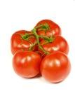 Cinco tomates da haste Imagens de Stock Royalty Free