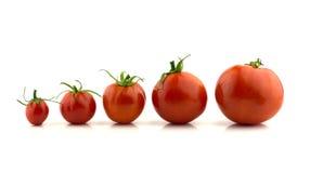 Cinco tomates de cereza alineados Fotografía de archivo