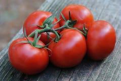 Cinco tomates vid-madurados regordetes Fotos de archivo