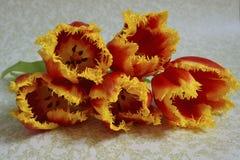 Cinco tulipanes anaranjados Fotos de archivo libres de regalías