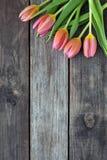 Cinco tulipas brilhantes em uma tabela de madeira Fotos de Stock