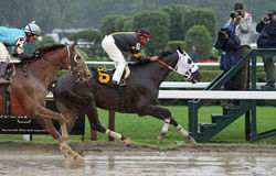 Cinder Cone Wins a Claiming Race. SARATOGA SPRINGS - JUL 23: Jockey Eibar Coa guides Cinder Cone through a downpour to victory, followed by Michael Luzzi and Royalty Free Stock Image