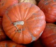 Cinderella pumpkin. Cucurbita maxima, flattened pumpkin with orange-red skin and sweet flesh stock photos