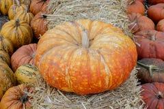 Cinderella Pumpkin on display for sale. Stock Photography
