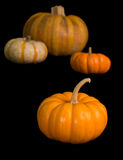 Cinderella Pumpkin Patch Stock Photography