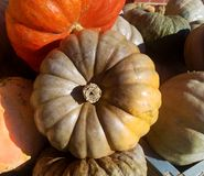 Cinderella Pumpkin Surrounded durch eine Vielzahl anderer Kürbise Lizenzfreie Stockfotografie