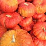 Cinderella pumpkins variety Stock Image
