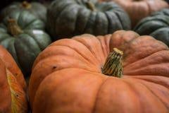 Cinderlla Pumpkin Stem Stock Photography