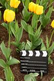 Cinema clapper board on ground among tulips Stock Photo