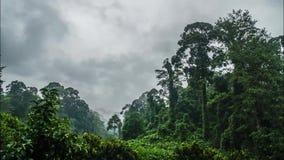 Cinemagraph有薄雾的雨林Timelapse在婆罗洲海岛上的 股票视频