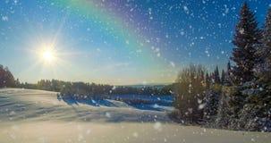 CINEMAGRAPH, 4k,落的雪在冬天森林里,圈 股票视频