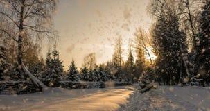 CINEMAGRAPH, 4k,落的雪在冬天森林里,圈 影视素材