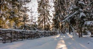 CINEMAGRAPH, 4k,落的雪在冬天森林里,圈 股票录像
