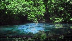 Cinemagraph της μπλε λίμνης Sra Morakot στην επαρχία Krabi στην Ταϊλάνδη Διάσημη φυσική έλξη σε Krabi απόθεμα βίντεο