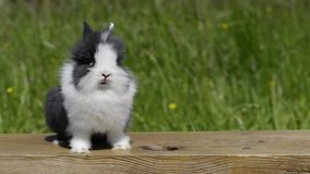 Cinemagraph av en kanin stock video