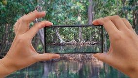 Cinemagraph brać fotografię Szmaragdowy basenu i mangrowe lasu Pa Phru Tha Pom Khlong Pieśniowy Nam w Krabi prowinci zbiory wideo