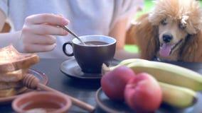 Cinemagraph - Breakfast woman having morning coffee on terrace stock footage