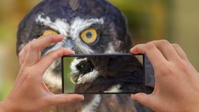 Cinemagraph de tomar la foto del perspicillata con gafas de Owl Pulsatrix almacen de video