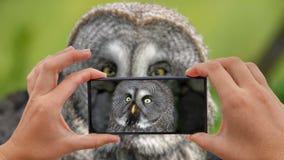 Cinemagraph di presa della foto di grande nebulosa di Grey Owl Strix stock footage