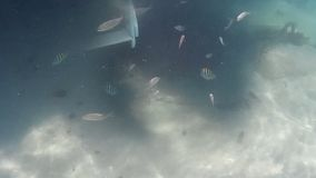 Cinemagraph effect with motionless marine background and tropical fish moving. In murky waters stock footage