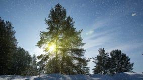 CINEMAGRAPH, 4k, μειωμένο χιόνι στο χειμερινό δάσος, βρόχος απόθεμα βίντεο