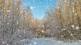 CINEMAGRAPH 4k, falla som är insnöat vinterskogen, ögla stock video