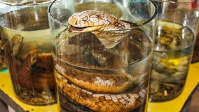 Snake liquor cinemagraph. Cinemagraph loop of the typical Thai liquor of snake in the traditional market of Laos during the famous tour of the Golden Triangle stock footage