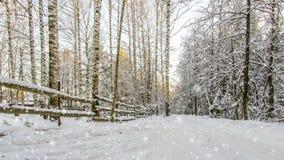 CINEMAGRAPH, 1080p, nieve que cae en el bosque del invierno, lazo almacen de metraje de vídeo