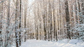 CINEMAGRAPH, 1080p, nieve que cae en el bosque del invierno, lazo metrajes