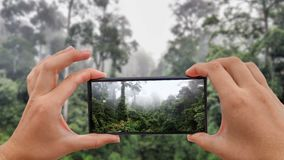 Cinemagraph of Taking Photo of Tropical Rainforest Dipterocarp Trees. On Borneo stock video