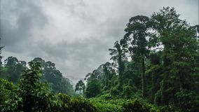 Cinemagraph Timelapse de Misty Rainforest en la isla de Borneo almacen de video