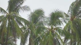 Cinemagraph von Palmen unter starkem Regen stock footage