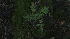 Cinematic video in motion from above with a lonely tree growing from moss. Symmetric cinematic video in in motion from above with a lonely young sprout of a tree stock video