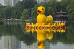 Cinese asiatico, Pechino, parco del parco di Taoranting, anatra del rabarbaro Immagini Stock Libere da Diritti
