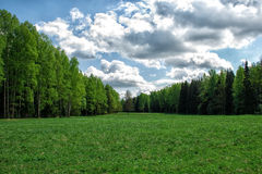 Cinghia del terreno boscoso Immagine Stock Libera da Diritti