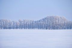 Cinghia della foresta degli alberi di pioppo sotto la brina nel campo di neve nella vittoria Fotografia Stock Libera da Diritti