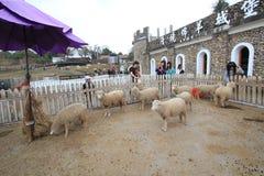 Cingjing Farm In Taiwan Stock Images