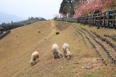 Cingjing Farm in Taiwan Royalty Free Stock Photography