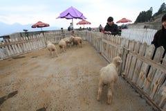 Cingjing Farm in Taiwan Royalty Free Stock Photo