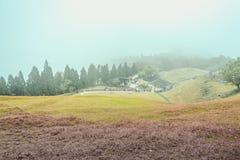 Cingjing, farm, taiwan. Spring, summer, sunny taiwan tree view royalty free stock photography