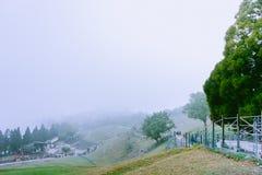 Cingjing, farm, taiwan. Spring, summer, sunny taiwan tree view royalty free stock photo