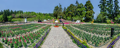 Cingjing Small Swiss Garden in Nantou,Taiwan. Royalty Free Stock Image
