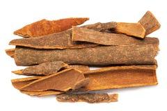 Cinnamomum camphora or Cinnamon bark Stock Image