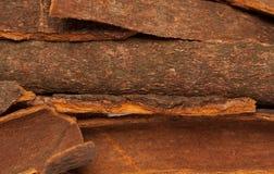 Cinnamomum camphora or Cinnamon bark Royalty Free Stock Image