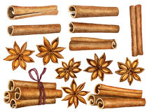 Cinnamon and anise stars set isolated on white background. Kitchen herbs and spices collection. Traditional christmas. Spices. Watercolor illustration Royalty Free Stock Image