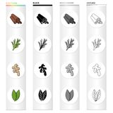 Cinnamon bark, spicy rosemary, ginger root, bay leaf. Spices set collection icons in cartoon black monochrome outline. Style vector symbol stock illustration Royalty Free Stock Photos